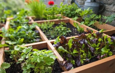 Square-Foot Gardening at NHS