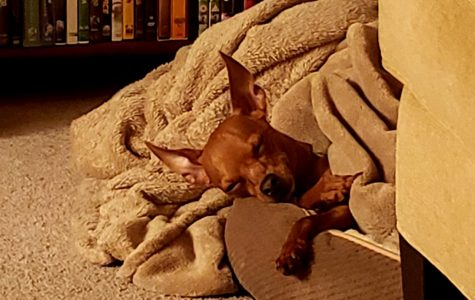 Sleepy Pupper (Debra C)
