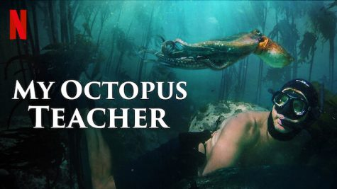 My Octopus Teacher explores the relationship between Craig Foster and an octopus, which Foster tracks throughout a kelp forest every day for a year.